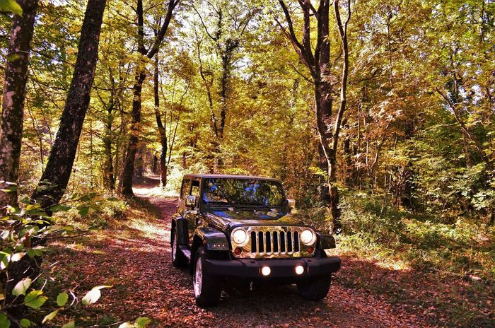 Tree Transportation Land Vehicle Mode Of Transport Outdoors Nature Day No People Jeep Wrangler JK Jeep Life ❤ Jeeplife EyeEm Selects Plant Tree Nature Mountain Slovenia Scapes Thats Me! Adventure Slovenia Autumn