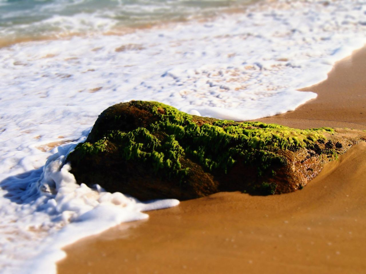 Beautiful stock photos of brazil, Beach, Beauty In Nature, Day, Moss