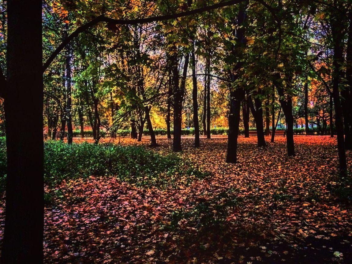 По-осеннему🍂🍃 Autumn Tree Tranquil Scene Beauty In Nature Scenics Space Bautiful Place Open Your Eyes Colour Of Life Moscow Walk Park Indoors  PyatniZa Photos