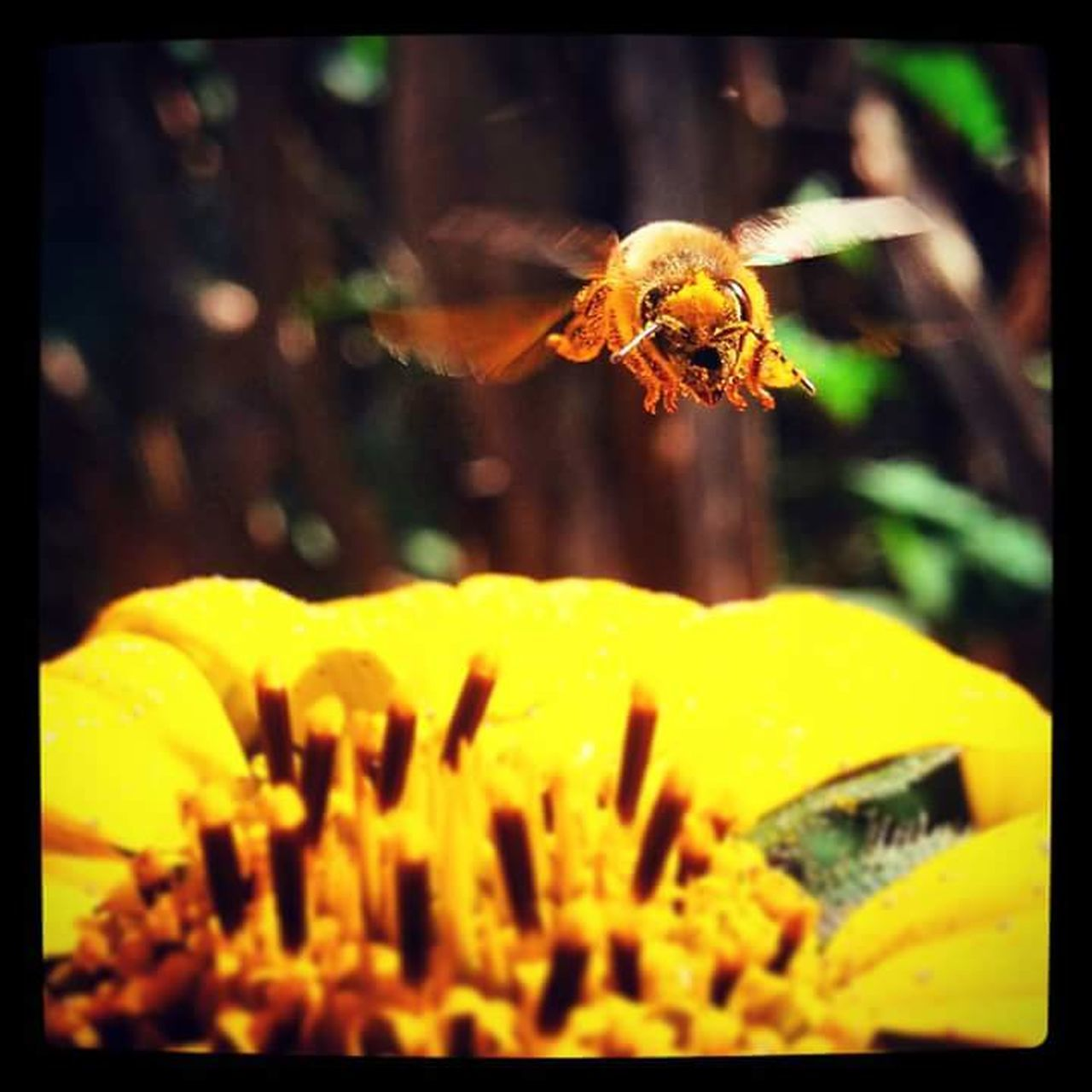 one animal, flower, insect, animal themes, animals in the wild, fragility, yellow, plant, nature, outdoors, spider, growth, petal, freshness, close-up, flower head, beauty in nature, day, no people, bee, buzzing
