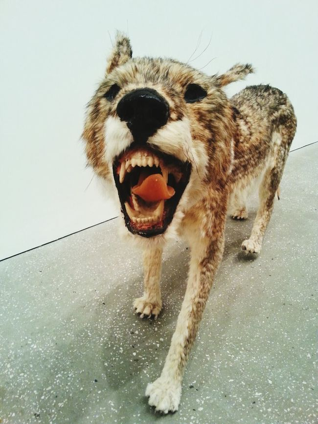 Fantastic Exhibition Cai Guo-qiang The Moment - 2014 EyeEm Awards