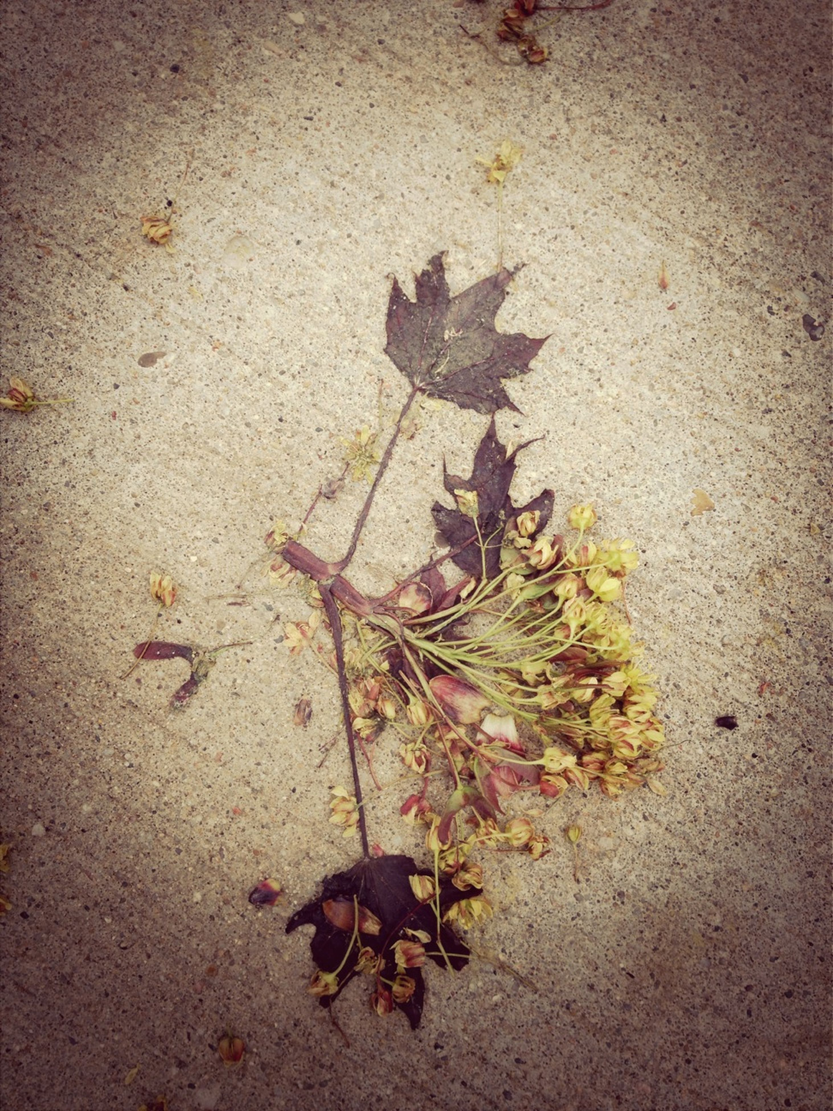 high angle view, leaf, dry, still life, ground, street, day, fallen, outdoors, death, no people, close-up, shadow, nature, dirt, sunlight, autumn, the end, shoe, messy