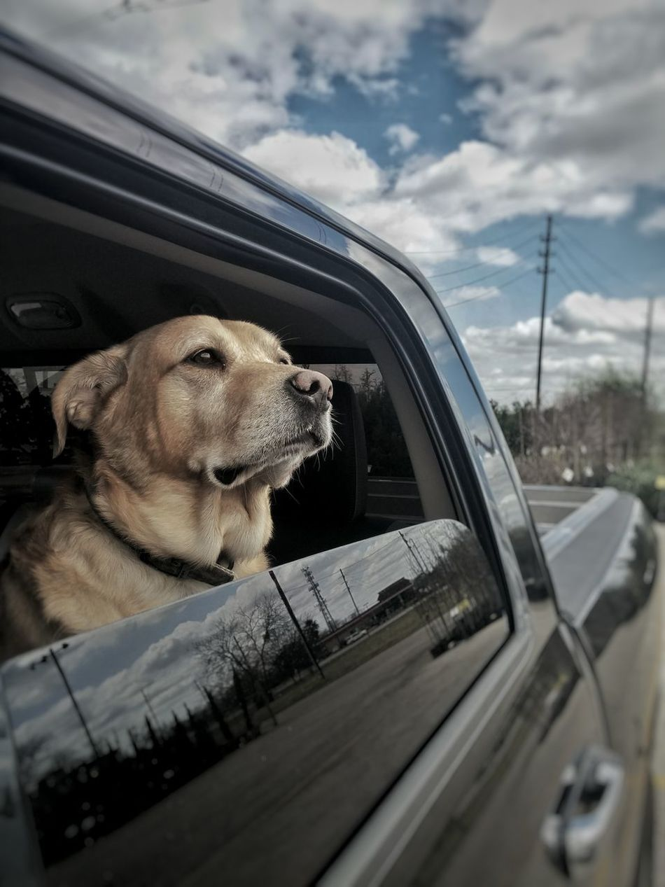 Demo at the hardware store. Demo Demolition DISTINGUISHED My Dogs Are Cooler Than Your Kids My Dogs Are My Children My Dogs A Beast! My Dog Desaturate Character Poised DISTINGUISHED Yellow Labrador Labrador Retriever Mans Best Friend Mr. Man Labrador Retriever Yellow Lab Dog Life Dog