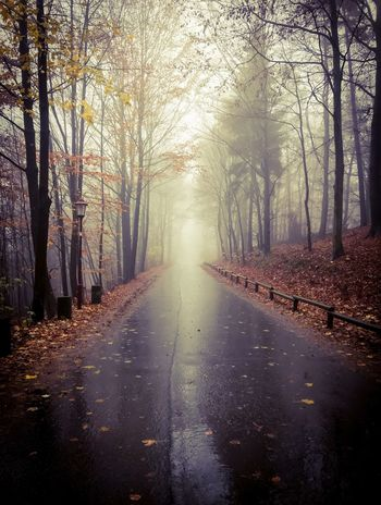 Autumn Tree The Way Forward Nature Tranquil Scene Bare Tree Tranquility Beauty In Nature Fog No People Autumn Outdoors Forest Day Tree Trunk Road