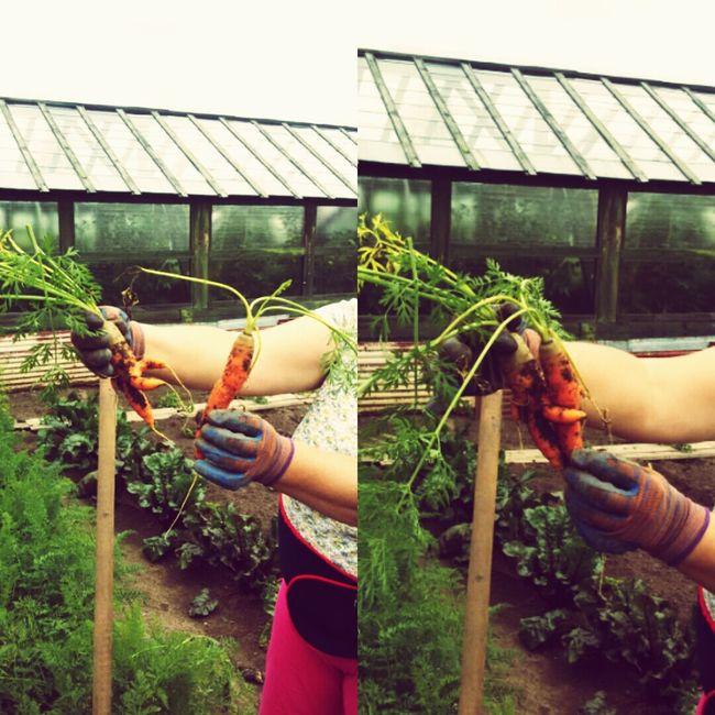 обнимашки любовь морковка вот это настоящая любовь-морковь! Вот так-то!