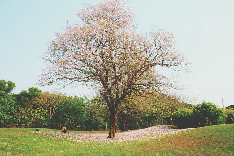Tree fower atumn tree in gardren Pink Flower Green Trees And Leaves Trees Flower Photography Garden