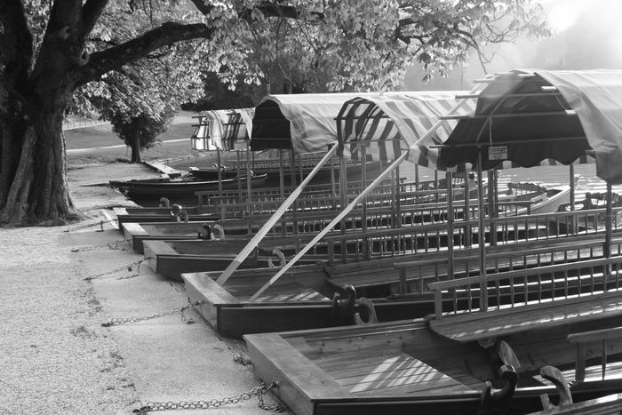 Tree Transportation Mode Of Transport Day Outdoors No People Tranquility Non-urban Scene Bled Lake Bled, Slovenia Pletna Boat Black And White Photography Monochrome MonochromePhotography