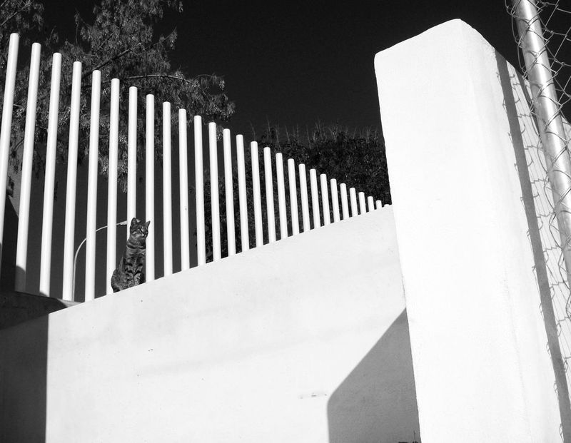 Black & White Wall Architecture Blackandwhite Blackandwhite Photography Building Exterior Built Structure Cat Clear Sky Close-up Day Light And Shadow No People Outdoors Sky Sunlight Tree Whitewashed EyeEmBlackAndWhite Low Angle View
