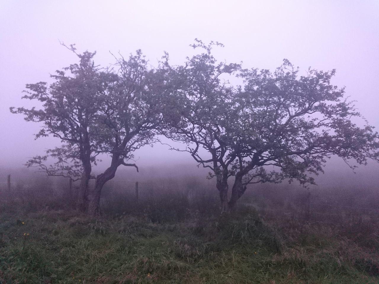 Northern Ireland Fog In The Trees Fog_collection Walking Blackmountain EyeEm Nature Lover Foggy Night