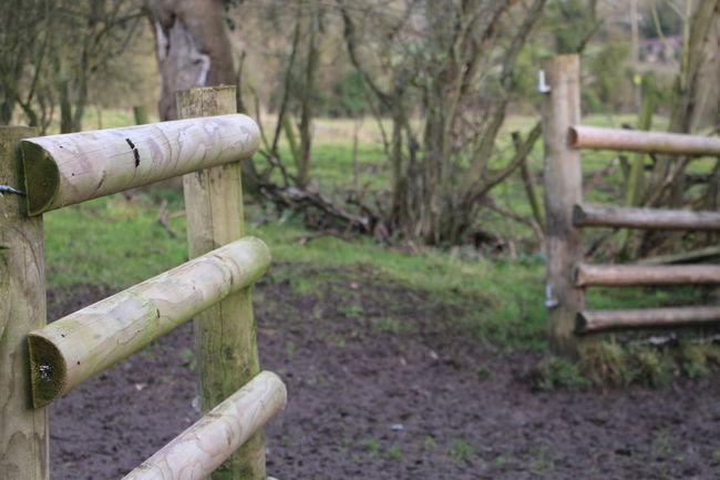 Winter Trees Winter Woodland Farm Wooden Fence Nature Countryside England Shropshire Showcase: January