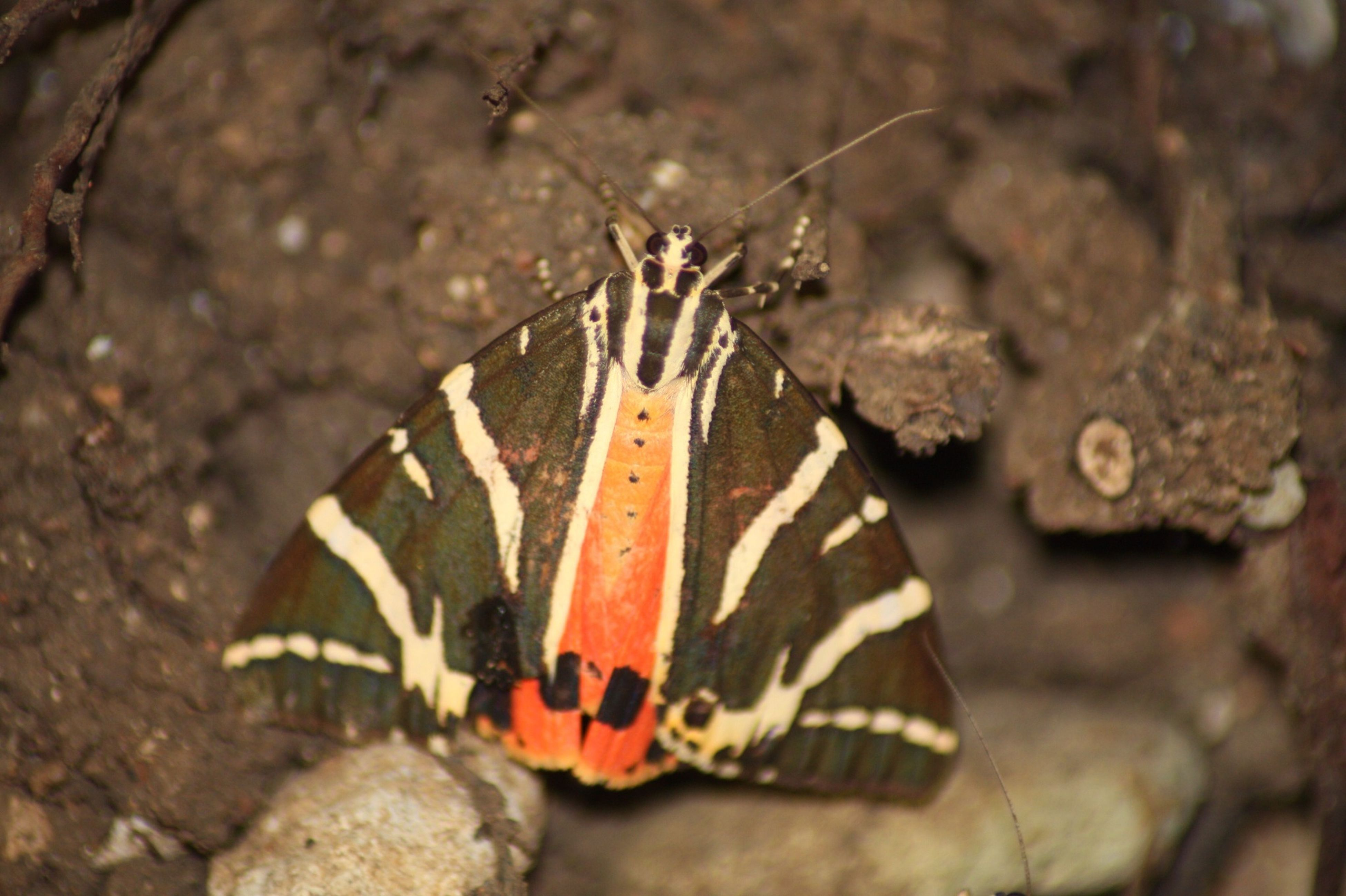 insect, close-up, focus on foreground, animals in the wild, one animal, animal themes, natural pattern, rock - object, wildlife, high angle view, nature, outdoors, day, damaged, butterfly - insect, butterfly, no people, ground, selective focus, textured