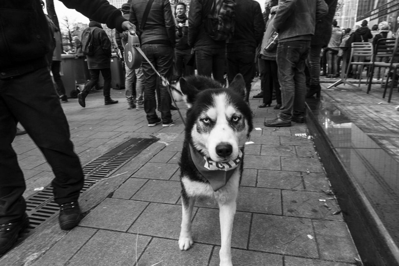 Dog Pets Domestic Animals Street Low Section Looking At Camera Mammal One Animal Human Leg Standing City Portrait Outdoors Real People Men Large Group Of People Day Dog Lead Human Body Part