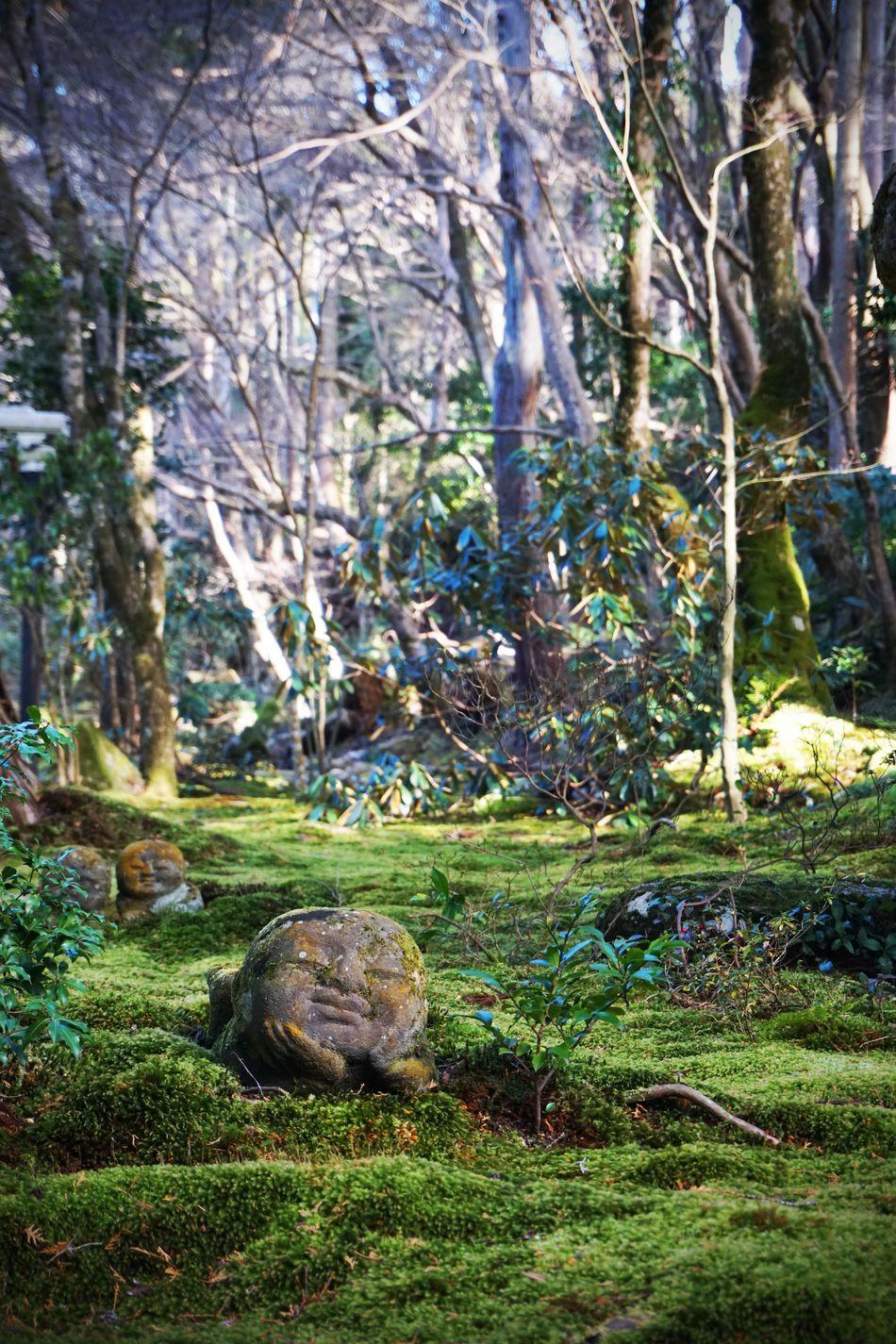 2017 Forest Green Japan Jizo Kyoto Moss Nature Ohara Sanzen-in Sanzen-in Temple Statue Tree Warabe-Jizo わらべ地蔵 京都 地蔵 大原三千院 Temple