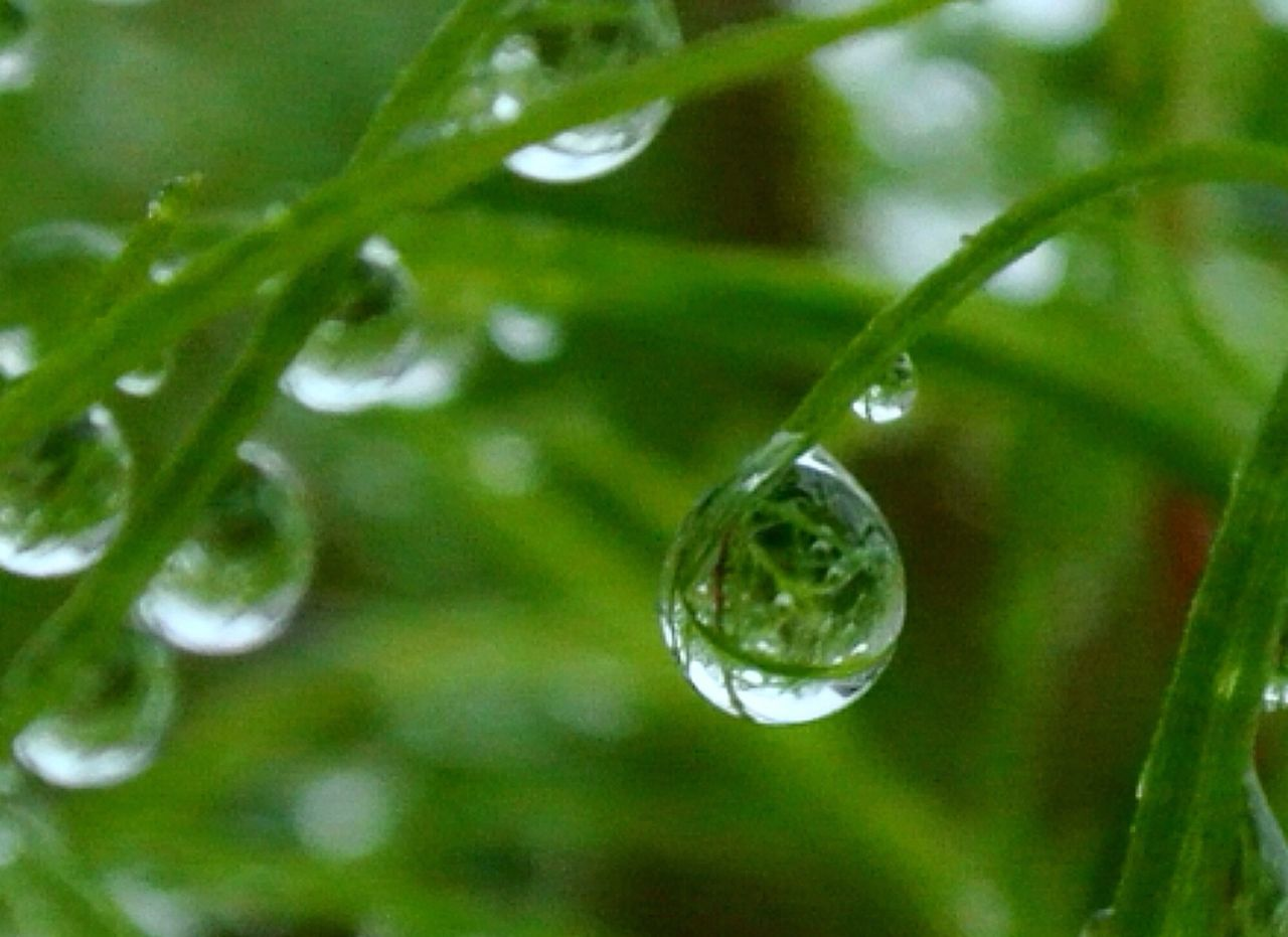 朝露 Waterdrops