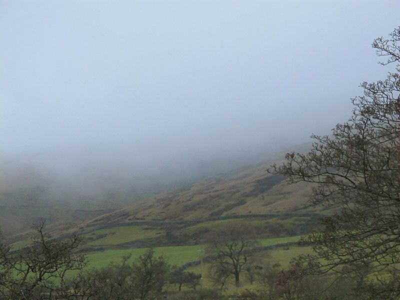 Fog Tree Nature Landscape Forest Beauty In Nature Pinaceae Outdoors Idyllic Tranquility No People Scenics Sky Social Issues Mountain Lush - Description Day Nature Reserve EyeEmbestshots Pendle Hill Eye Em Nature Lover Eerie Beautiful Witchcraft  Eyeemphotography Misty Mornings