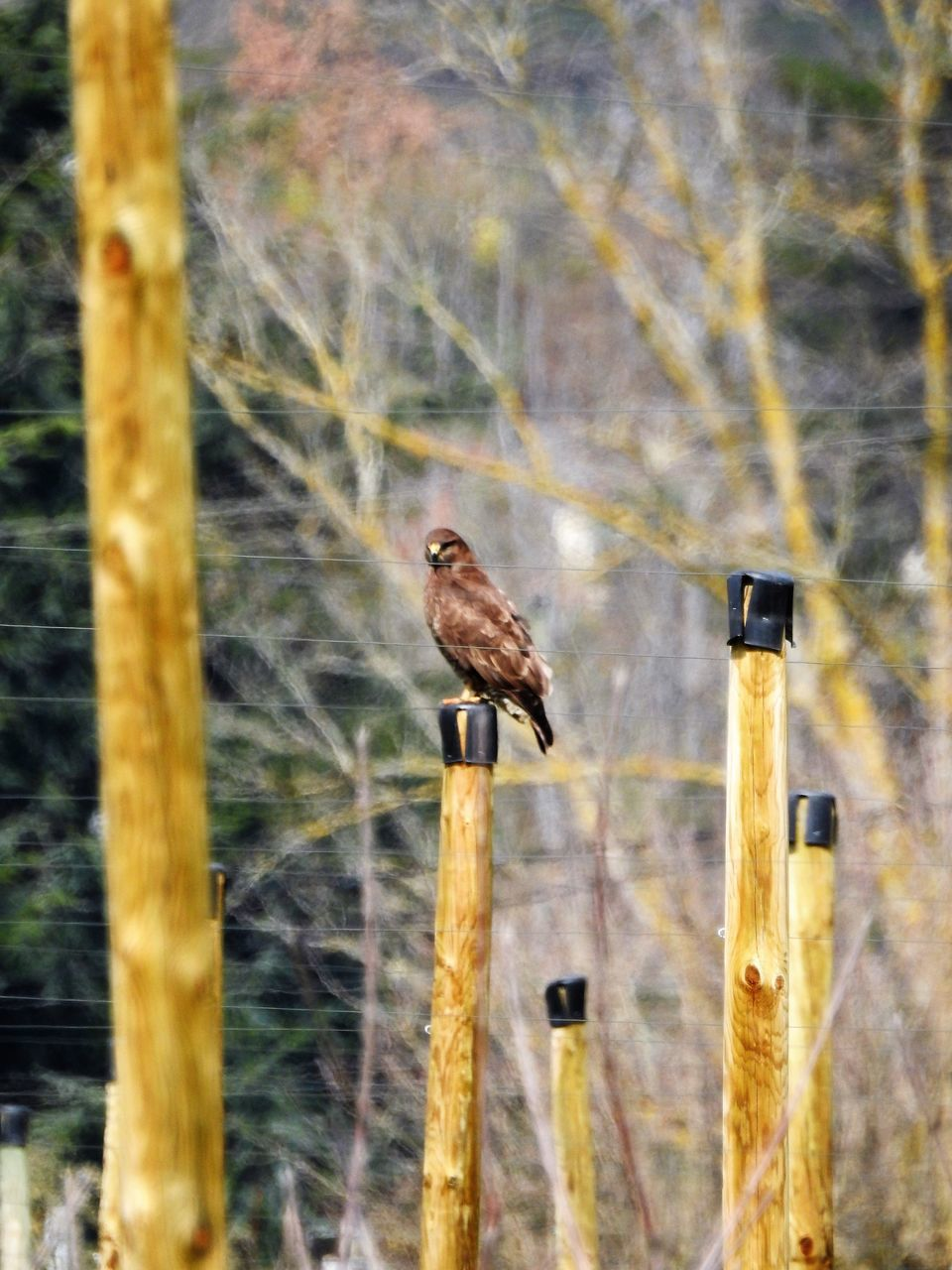 animal themes, bird, animals in the wild, perching, one animal, animal wildlife, focus on foreground, no people, day, outdoors, nature, wooden post, close-up