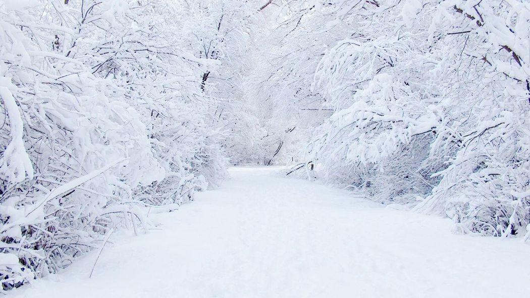 برف کرمان .. جنگل قاءم......