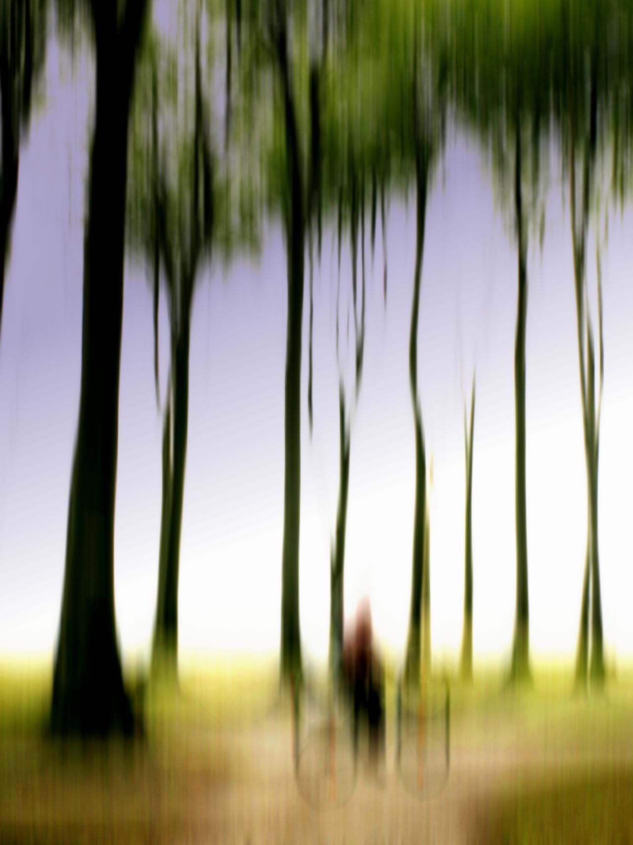 Radfahrer fährt durch Gespensterwald ANGST Angsty Beauty In Nature Day Fahrrad Geist Geister Geisterbild Geisterhaft Gespenster Gespensterwald Nature One Person Outdoors Radfahrer Tree Unscharf Unschärfe Wald Waldspaziergang