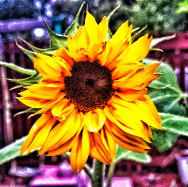 Sunflower Kid's Nursery Project Tah Dah