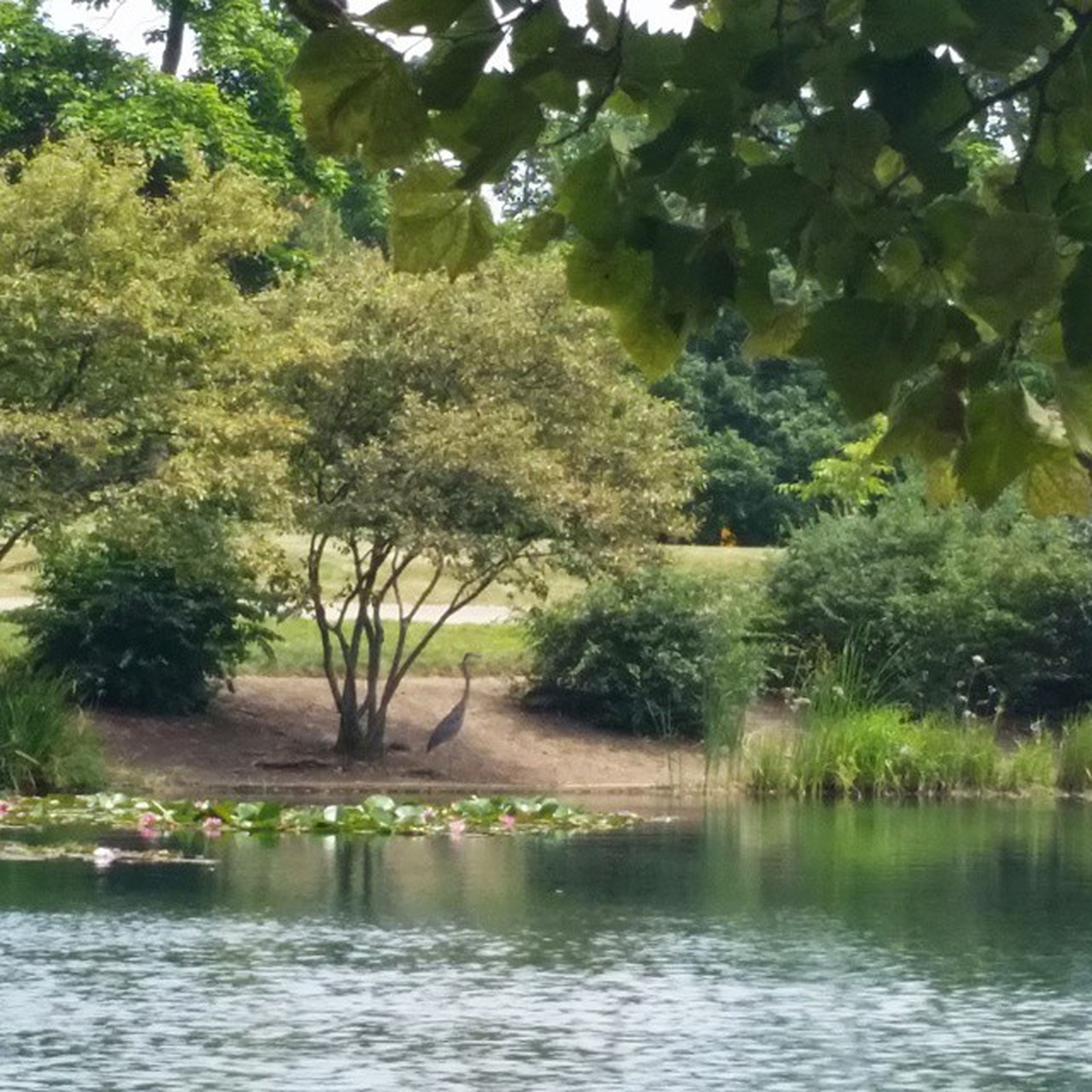 tree, water, growth, tranquility, waterfront, nature, tranquil scene, beauty in nature, green color, river, scenics, reflection, branch, lake, park - man made space, pond, plant, outdoors, idyllic, day