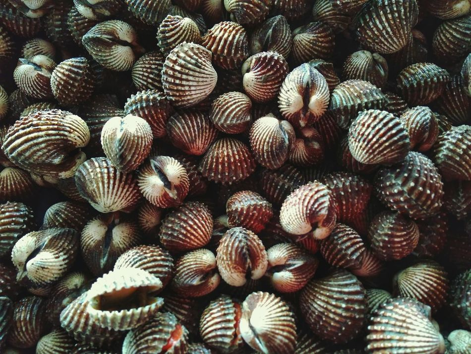 Cockles background Cockles Clams Backgrounds Raw Food Freshness Food No People Top View Texture Seafoods Bivalve Cockleshell Clam Shells Seashell
