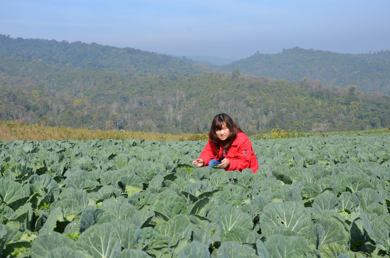 Agriculture Beauty In Nature Cabbage Farm Cabbages Landscape Mountain Outdoors Plant Women