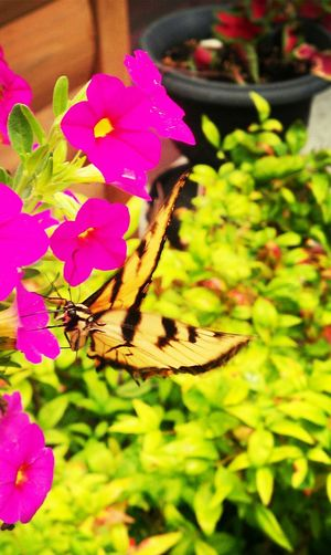 The Five Senses Beautifulbutterfly YummyFlower Eye Em Nature Lover ChapmansboroTN Oneofakind EyeEm Best Shots Androidography