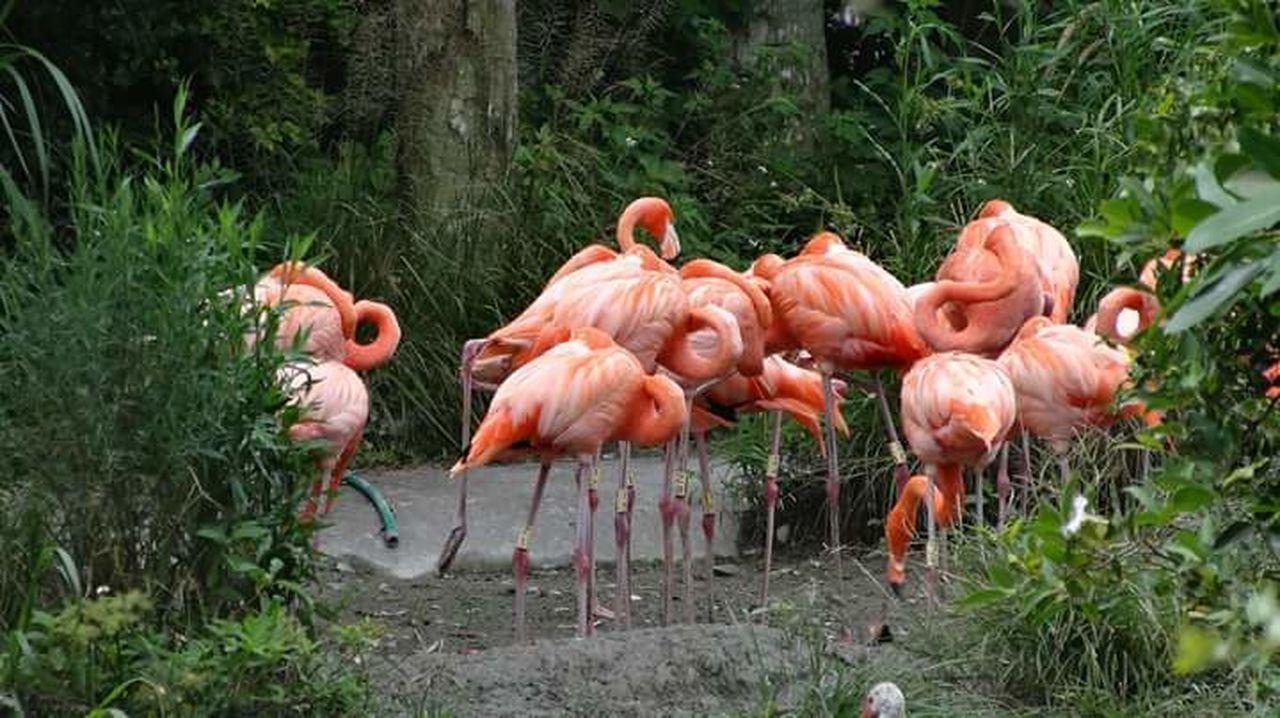 Flamingo Hello World Natur!!