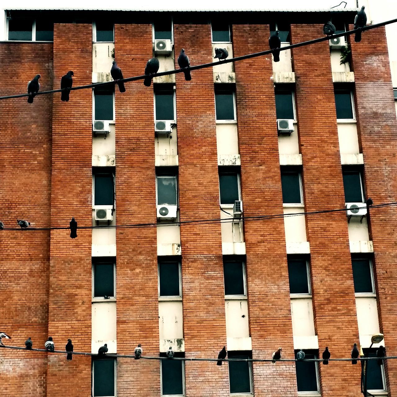 You can't shake us, We're not leaving, We're living on high wire. . ..Urbanphotography Urban Exploration Walking Around The City  Johor Bahru Streetphotography Eye4photography  Adapted To The City
