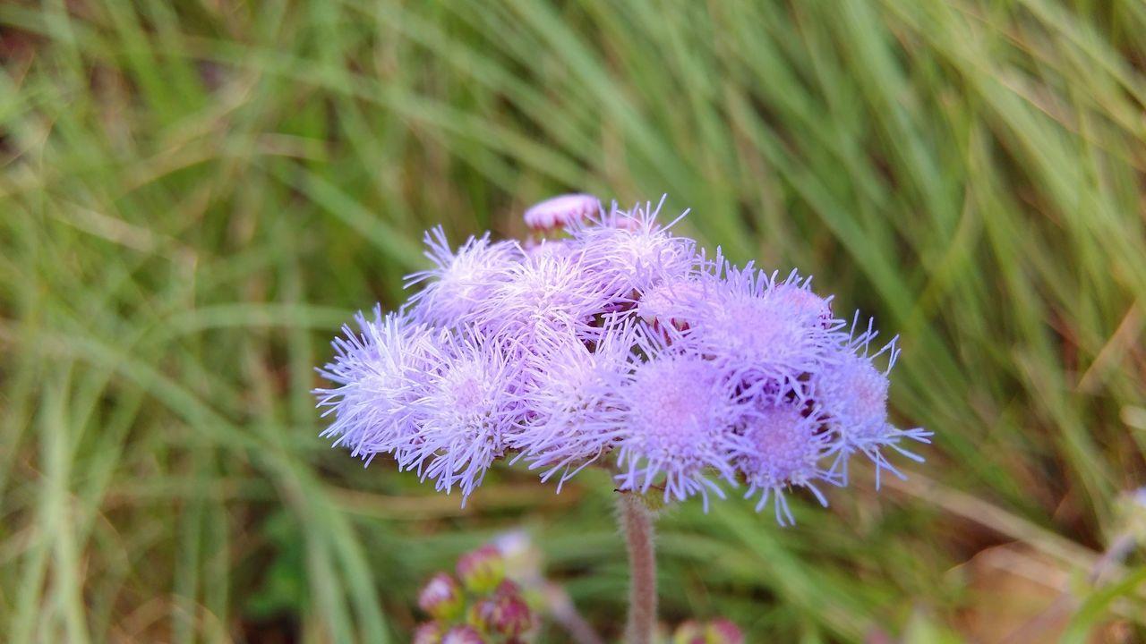 Macro Flowers Flower Mobilephotography Maximum Closeness