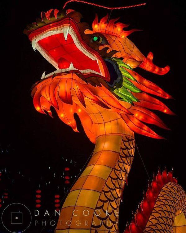 Longleat Dragon Longleatsafaripark Festivaloflight Chinese Lantern @longleatofficial