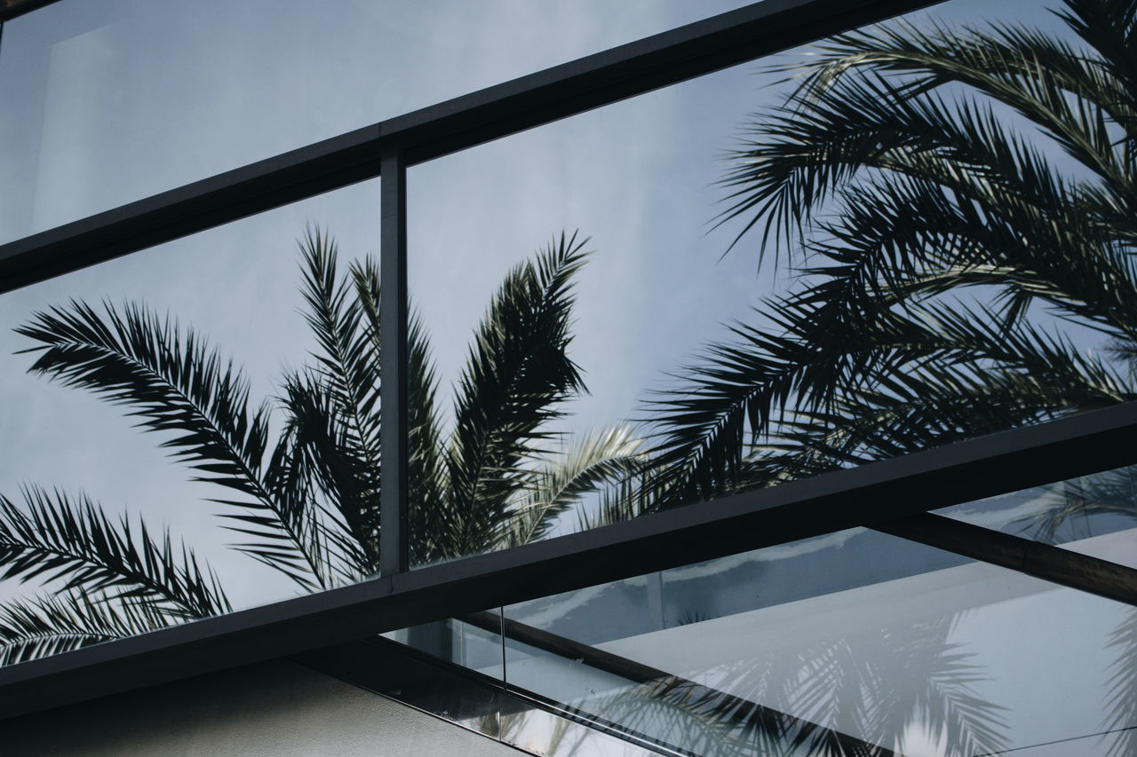 Palm Tree Tree Low Angle View Day No People Sky Nature Silhouette Outdoors Growth Textured  Contrast Minimalist Photography  Minimalist Architecture Reflection Built Structure Architecture Low Angle View Window Photography Beautiful Palm Tree Minimalist Photography  BYOPaper!