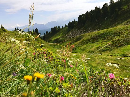 French Alps Alps Meadow Flowers Wildflower Nature Mountain Growth Beauty In Nature Day Grass Sky Landscape Tranquil Scene Flower Outdoors Field No People Tranquility Scenics