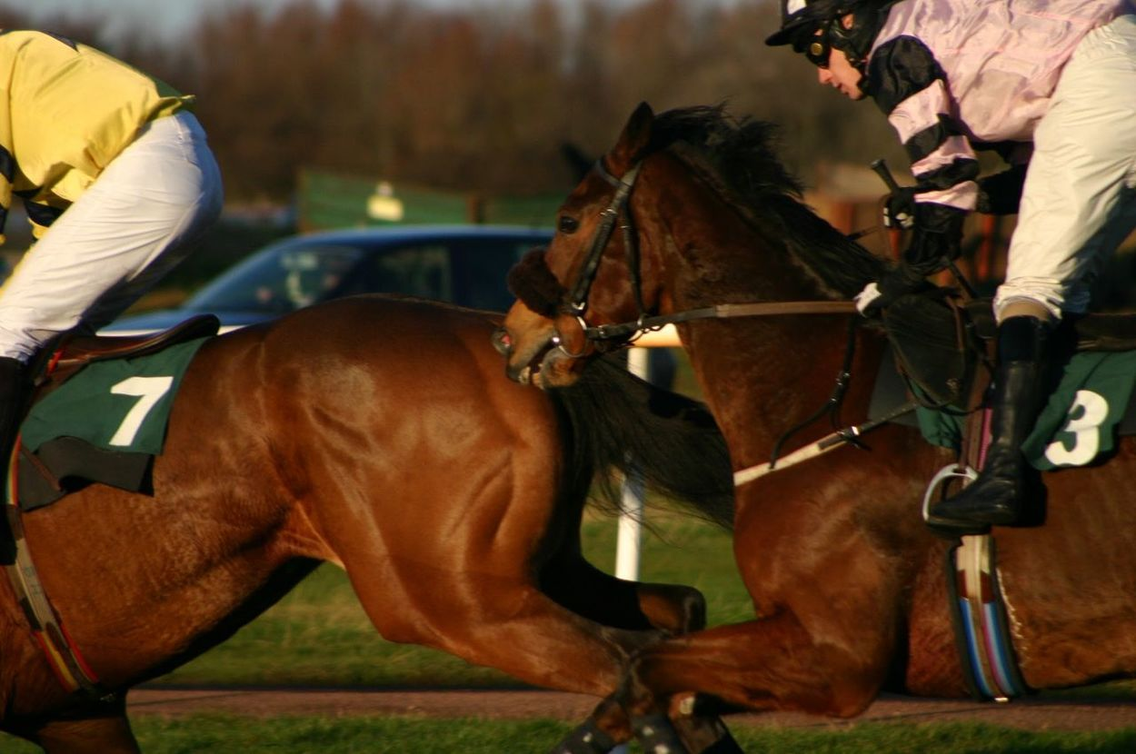 The chase... Horseback Riding Jockey Horse Racing Action Shot  Musselburgh Musselburghraces