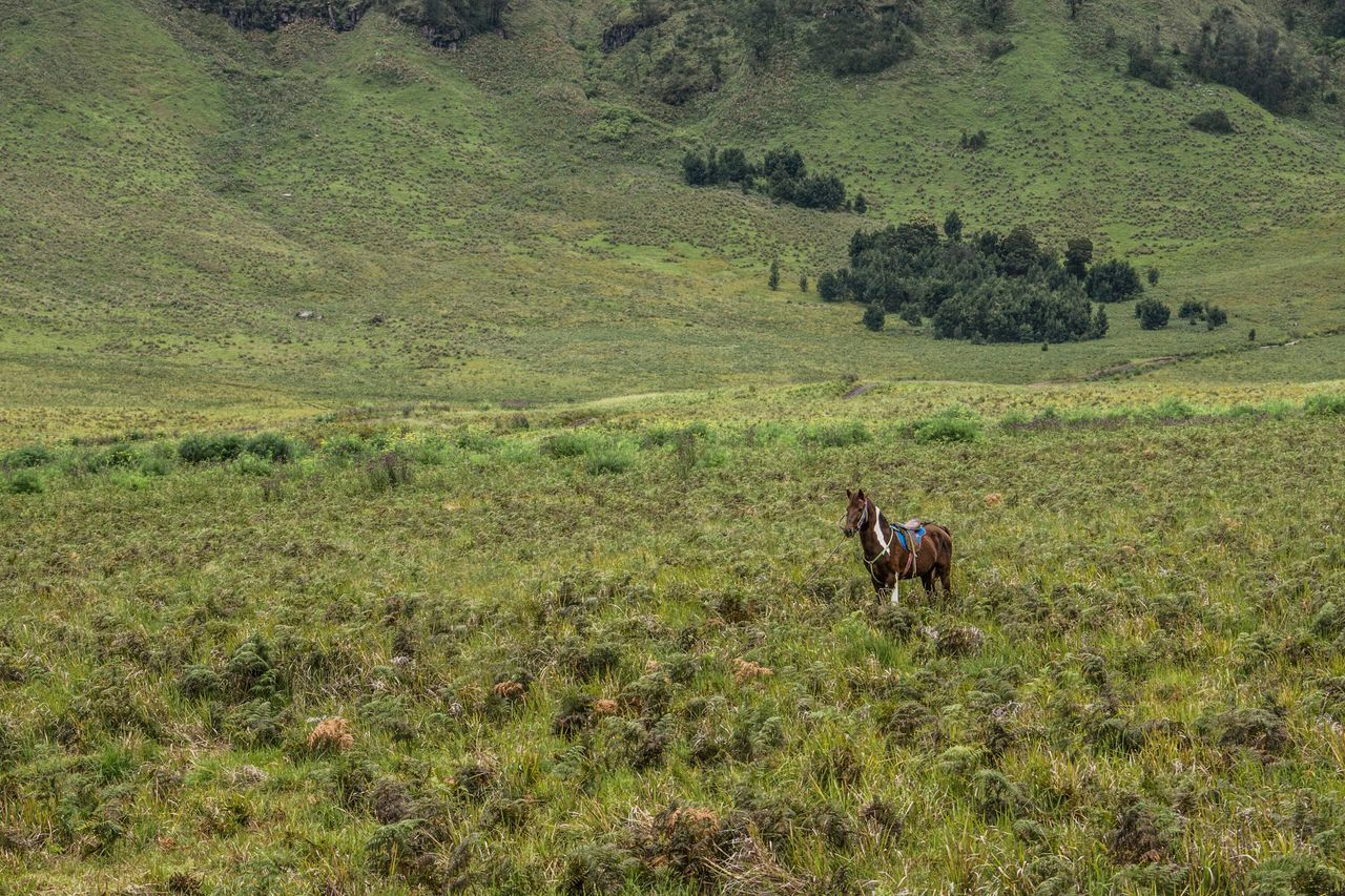 I am alone. A shot of lonely horse at Savanah or it famous names Bukit Teletubbies. Travel Destinations The Traveler - 2015 EyeEm Awards Horse Animals Teletubbies Savanah Bromo East Java INDONESIA Mountains