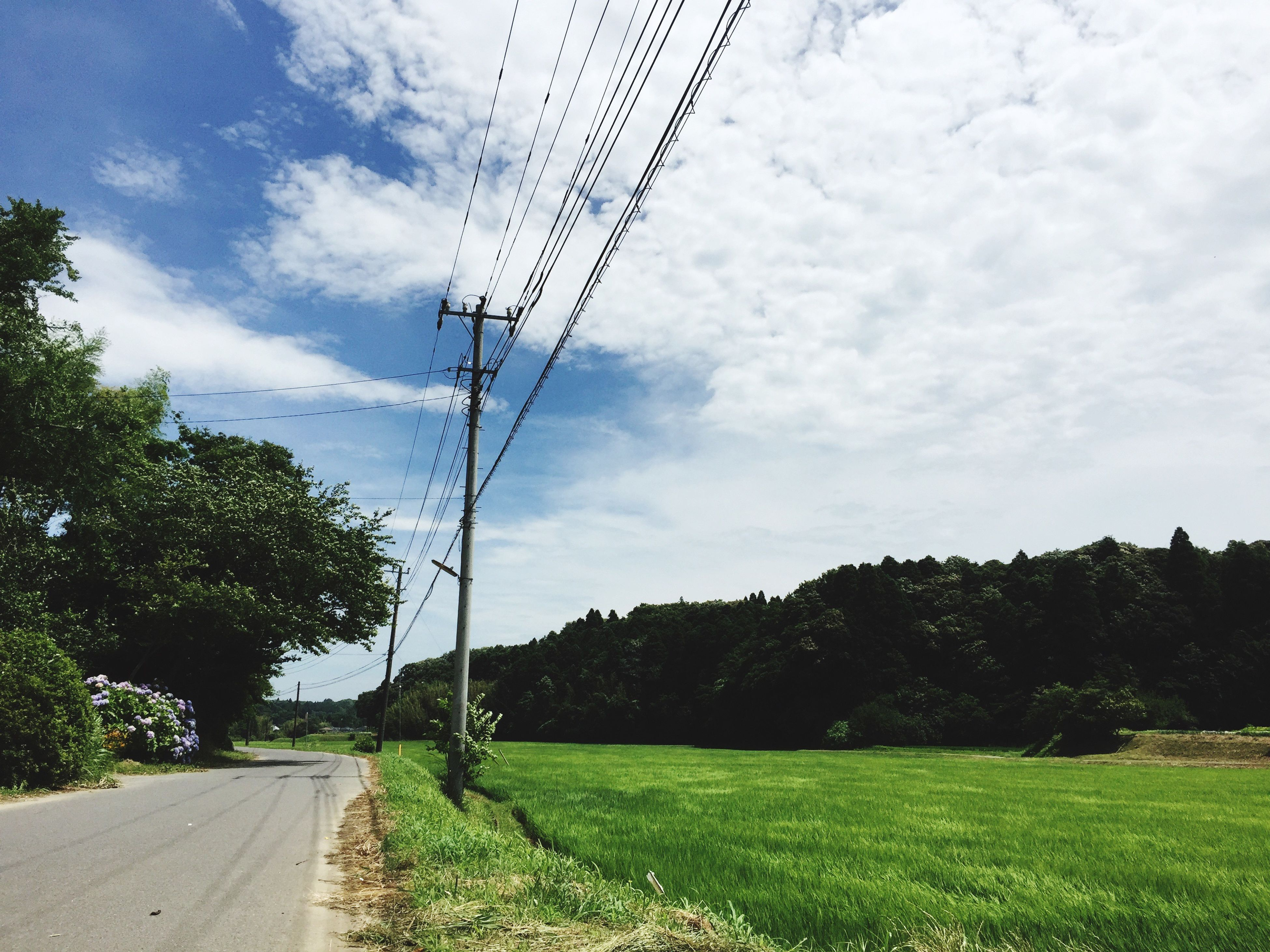 sky, tree, field, landscape, grass, electricity pylon, cloud - sky, road, tranquility, tranquil scene, power line, cloud, fuel and power generation, rural scene, the way forward, nature, transportation, growth, green color, scenics