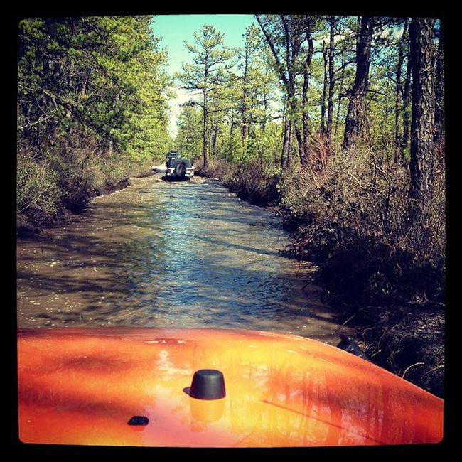 In the thick of things! Jeep Pinebarrens