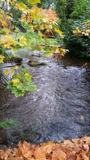 Creek swing thru trees Waterscape Beauty In Nature Tree Natural Parkland Creek Mouth Water Swing Maple Leaf Leaf Green Color