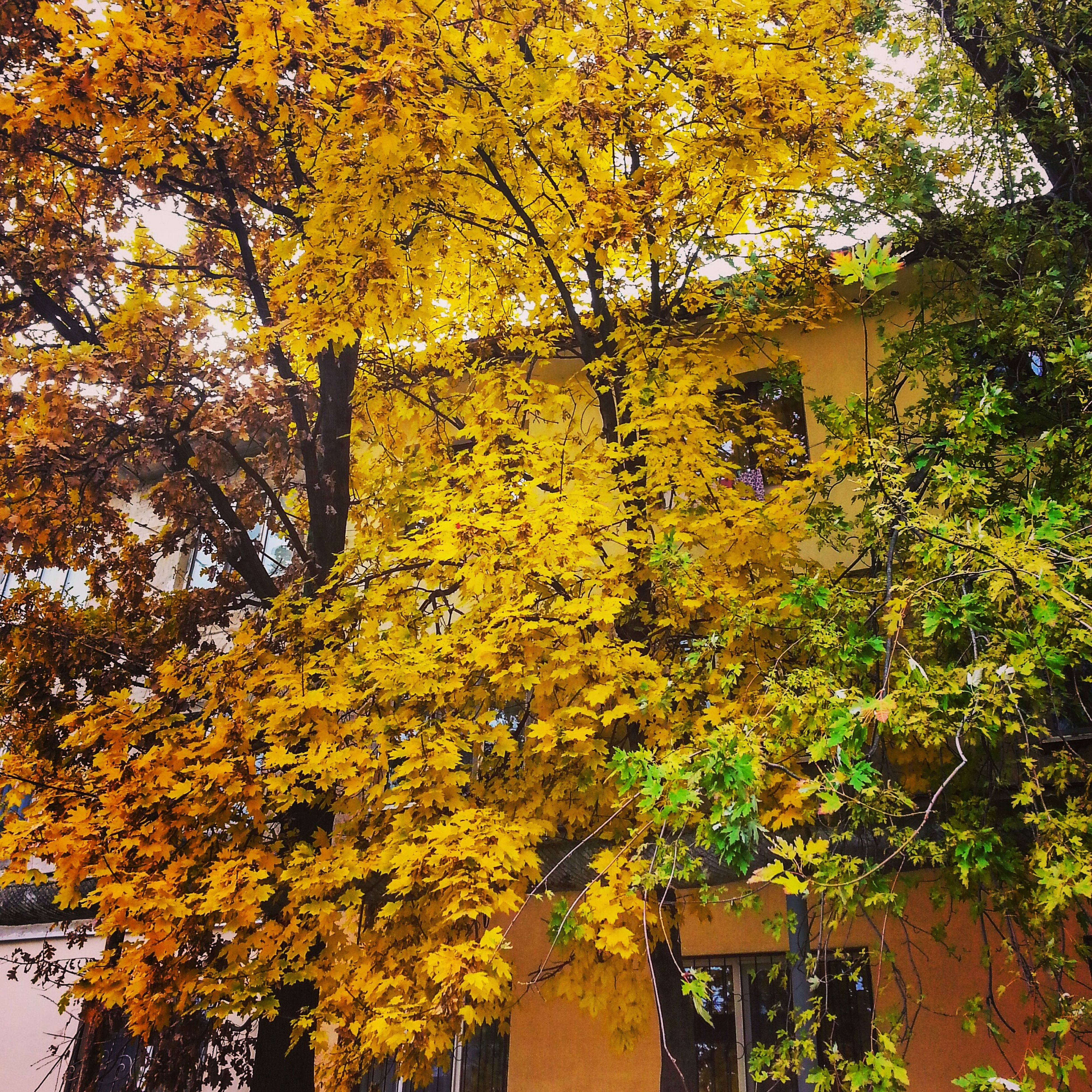 yellow, tree, growth, nature, no people, beauty in nature, leaf, autumn, low angle view, change, branch, outdoors, day, close-up, fragility, freshness