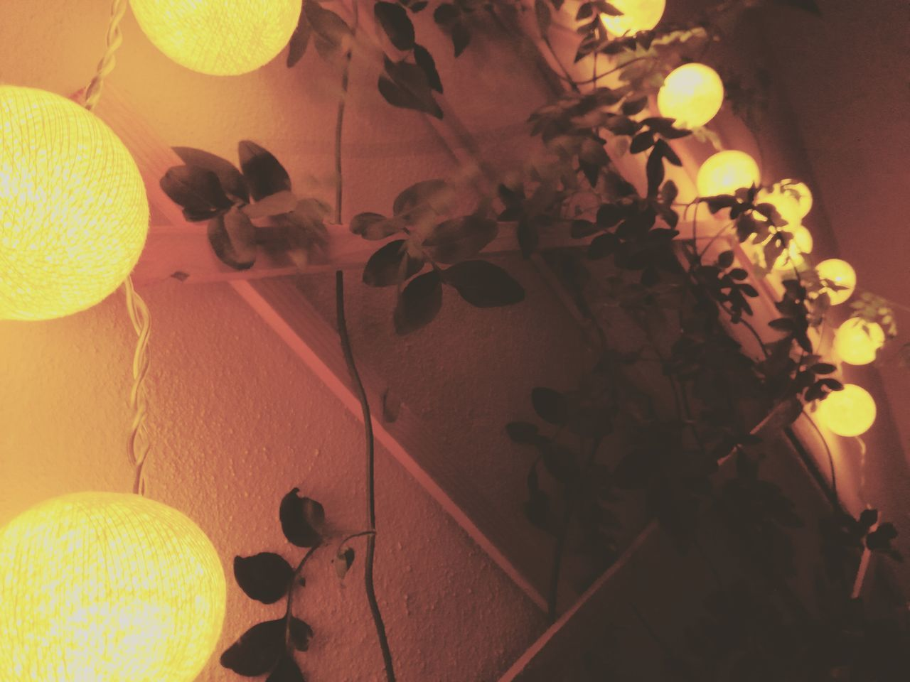 Architecture Close-up Design High Angle View Indoors  Leaf Light Nature Night Night Lights Nightphotography No People Plant Urban Lifestyle Yellow