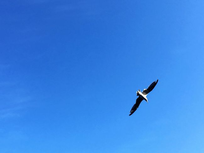 Nature Sky Gull