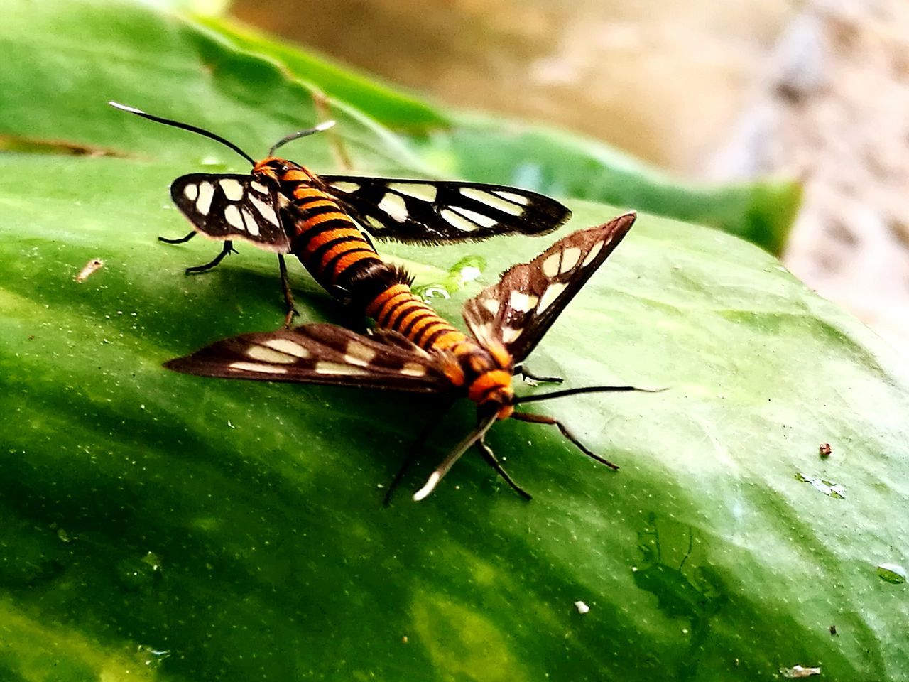Insect Nature Animal Wildlife
