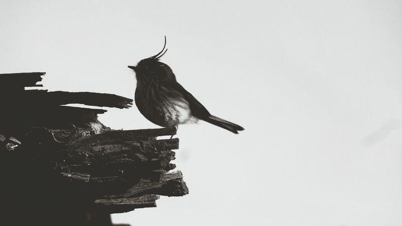 What Does Peace Look Like To You? Bird Photography Bird Black & White