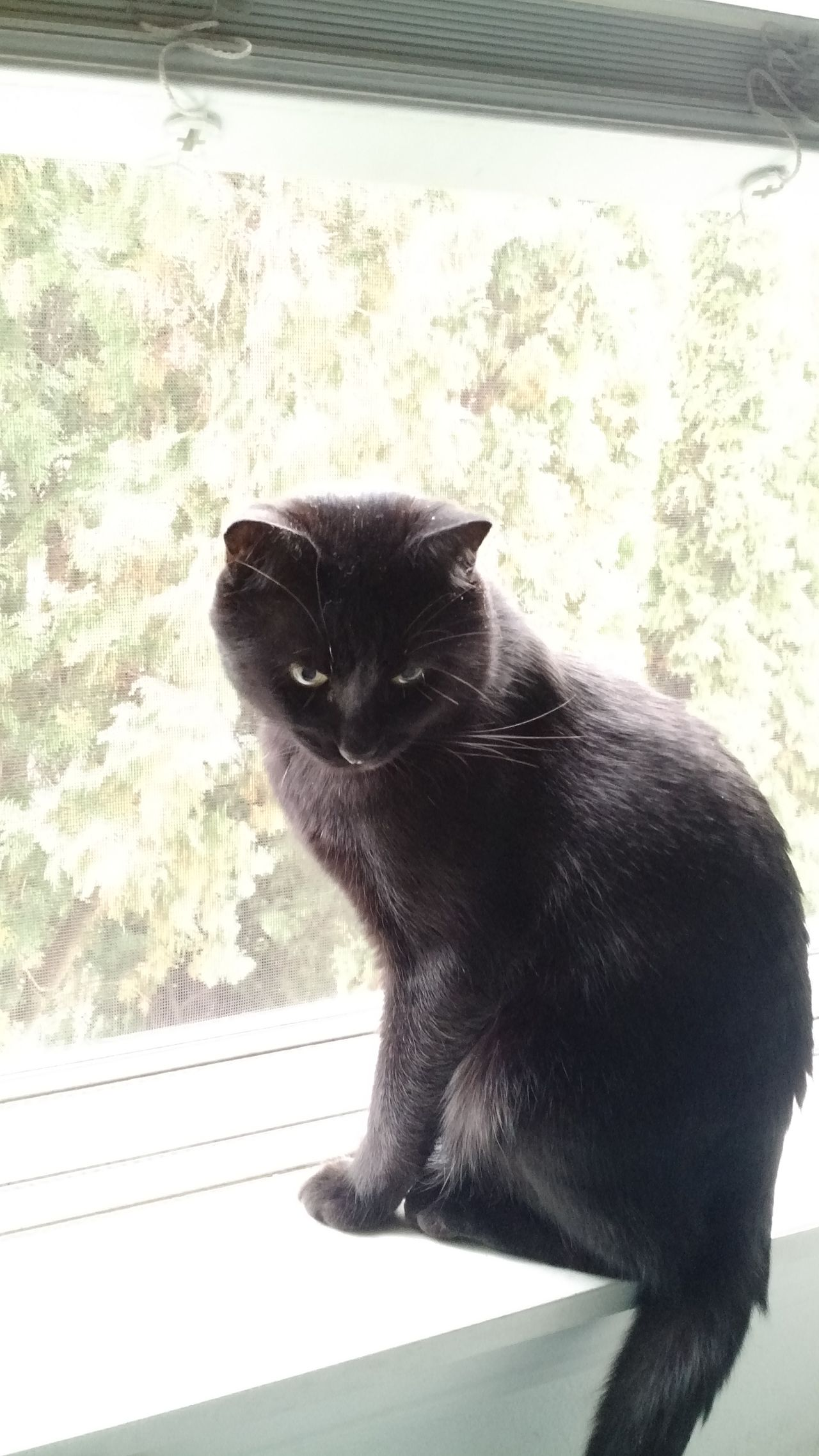 One Animal Animal Themes Mammal Domestic Cat No People Pets Domestic Animals Feline Close-up Day Outdoors Black Cats Are Beautiful
