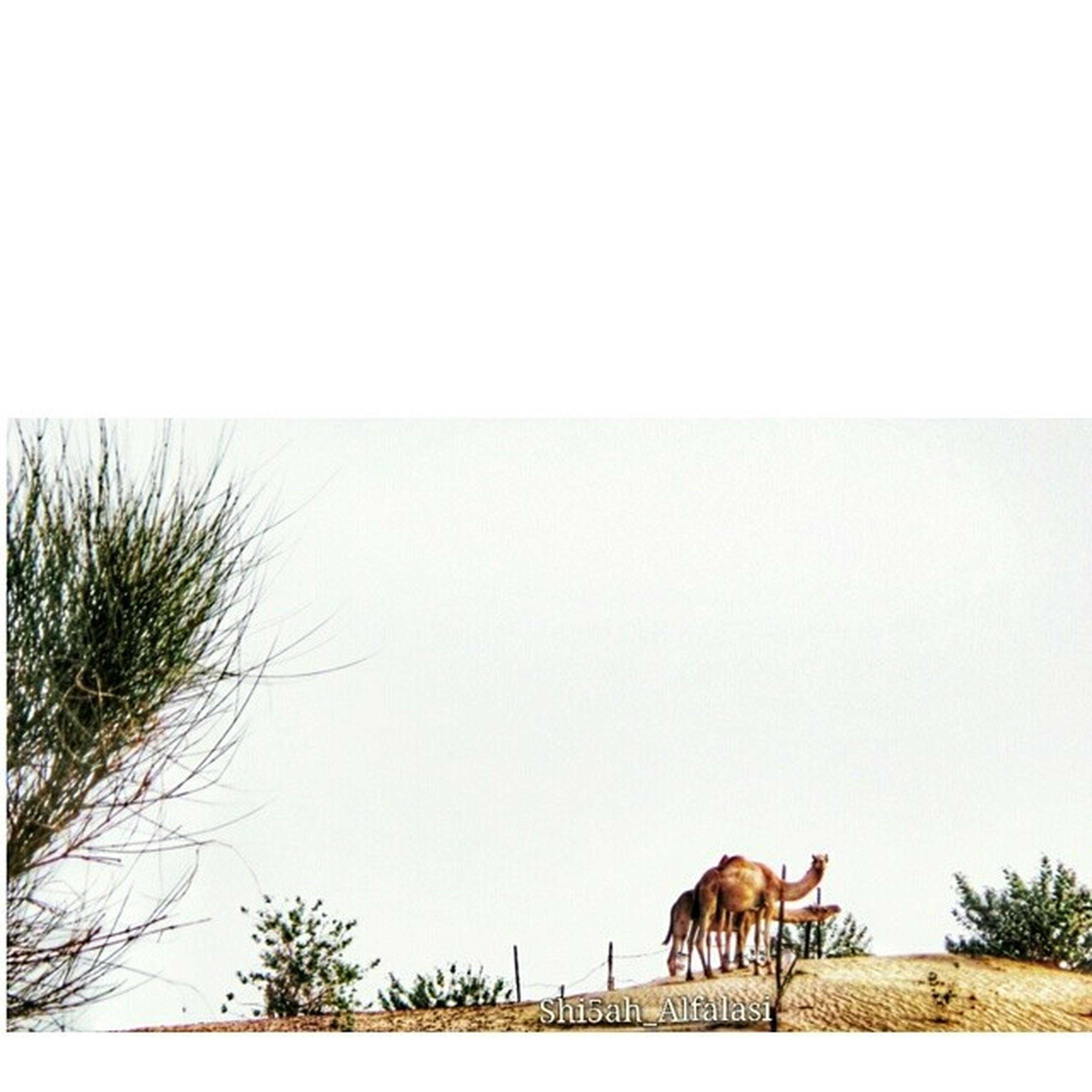 """Taken By_me ... .. . ﺇﻥ ﻡَ ﻗﺪﺭﺕِ ﺃﺩﻕّ ﺭﻗﻤﮓ ﻭﺁﺃﺣـ'ـﺂﻛﻴكـ ﺃﻋﻴﻴﺪ ﻓــﻲ ﺭﺁﺳِــﻲ ﺳﻮﺁﻟﻔﮓ ﻭﺣﻜﺂﮒ .. ﻭﺁﻥ ﻣﺂ ﻗﺩﺭﺕِ ﺁﺷﻮﻑ ﺯﻭﻟﮓِ ﻭﺁﻵﺁﻗﻴﻴﻚ !' ﺁﺩﻭﻭﺭﻙ ﺩﺁﺧِﻞ ﺍﻟﻘﻠﺐ ﻭﺃﻟﻘــﺂ ﺁ ﺁ ﺁ ﮒ"""" .. ... ي_شيوخ_مساكم_فخامه ?? .."""