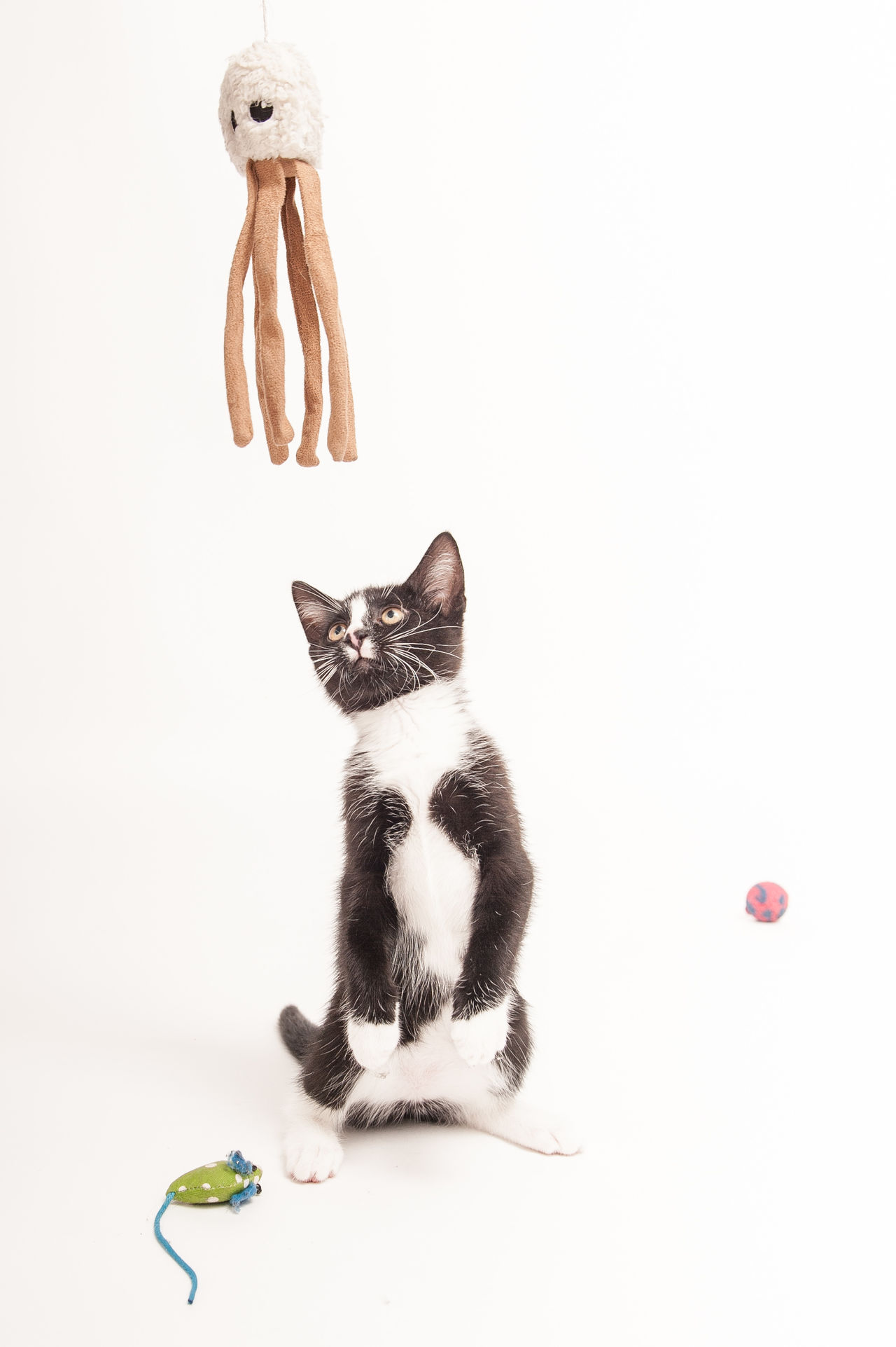 Beautiful stock photos of mouse,  Animal Themes,  Cat,  Copy Space,  Domestic Animals