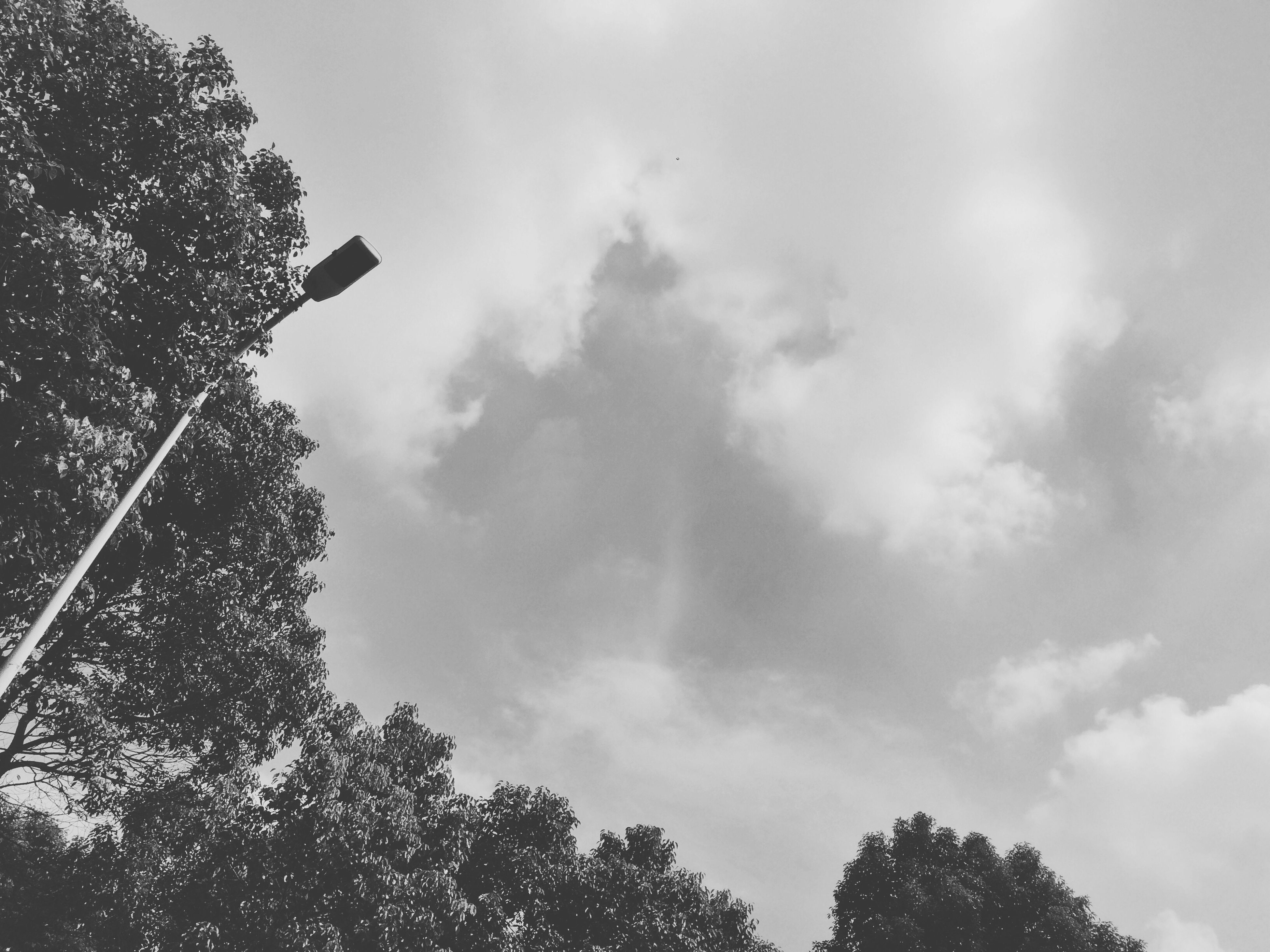 low angle view, sky, tree, cloud - sky, street light, cloudy, silhouette, cloud, nature, flying, bird, high section, outdoors, day, no people, growth, lighting equipment, beauty in nature, branch, animal themes