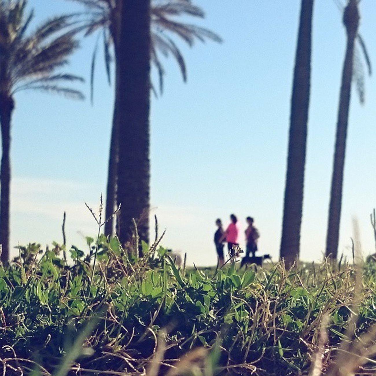 Para @snappybook_instagram Snappybook_primavera 🌸🌻🌼💠