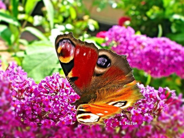 Not as focused as I would prefer, but still learning to manipulate the camera, everyday is a learning curve.... Butterfly Macro Photography Macro Insects Nature On Your Doorstep EyeEm Nature Lover Spiritual Awakening Hello World Taking Photos