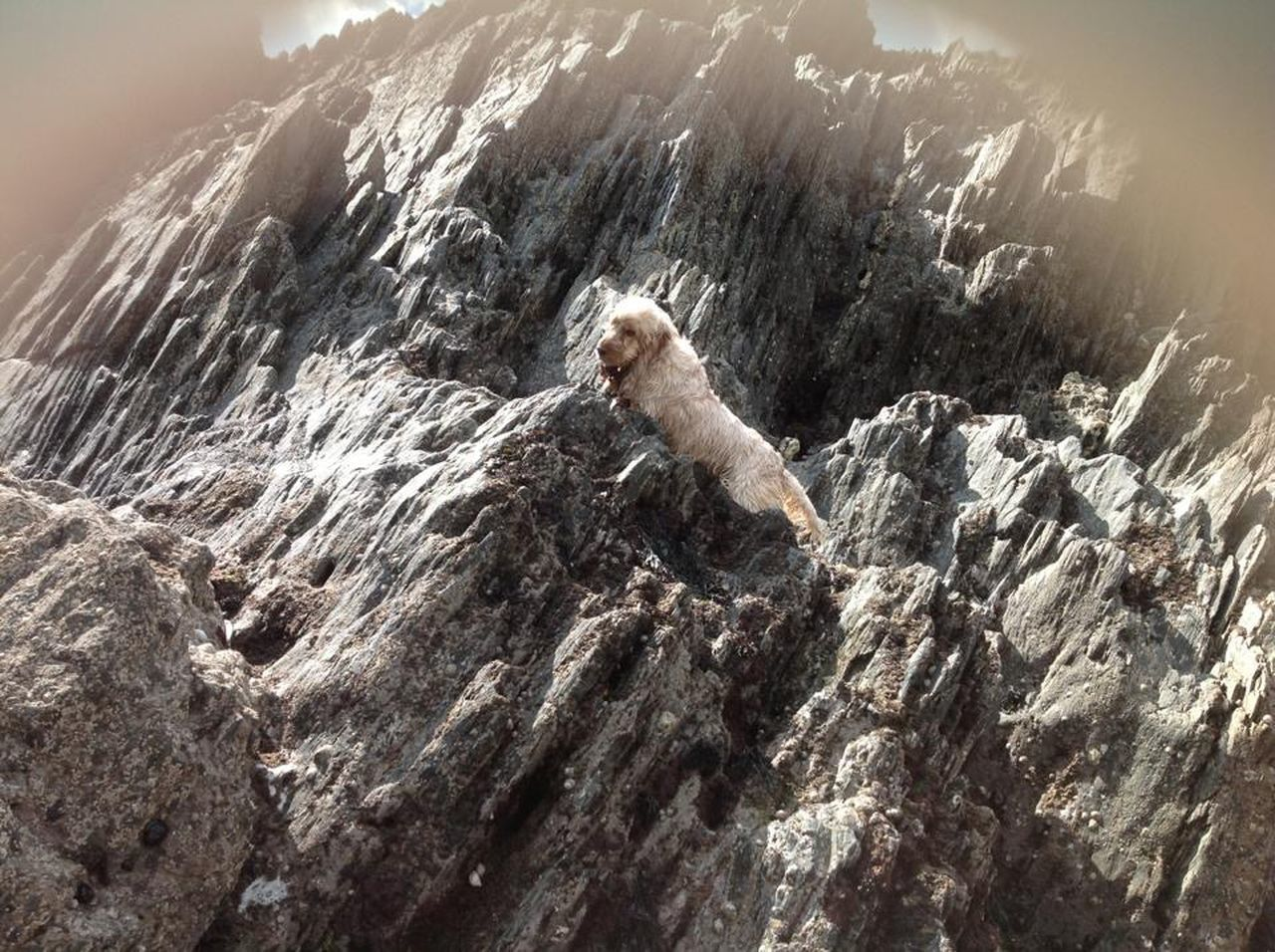 one animal, rock - object, nature, day, outdoors, animal themes, animals in the wild, animal wildlife, no people, mountain, cliff, mammal, full length, beauty in nature